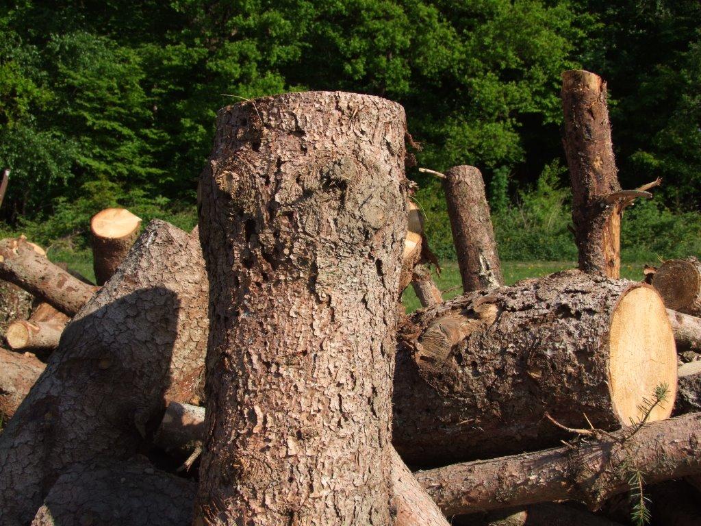 Baumfällung Gartenservice Fernholz